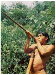 Indigenous Blowgun Use