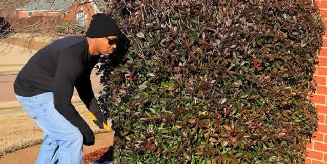 Burglar Using Bushes as Concealment